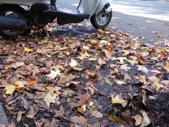 leaves on the road with scooter parked