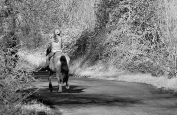 Horse and rider taking up a large proportion of a single-laned road